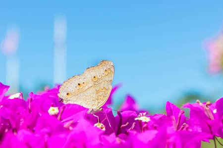 butterfly garden: The butterfly and flowers , Butterfly garden bougainvillea flower