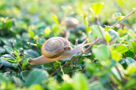 snail , in the morning dew eat grass