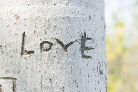 El árbol está grabado la palabra amor Foto de archivo - 78499156
