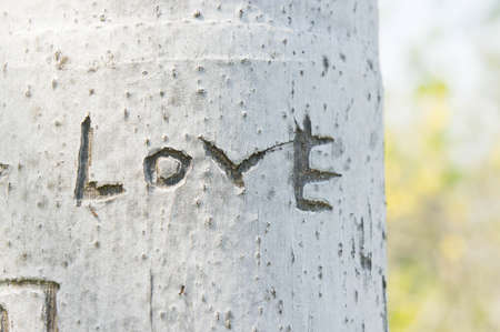 The tree is engraved the word love
