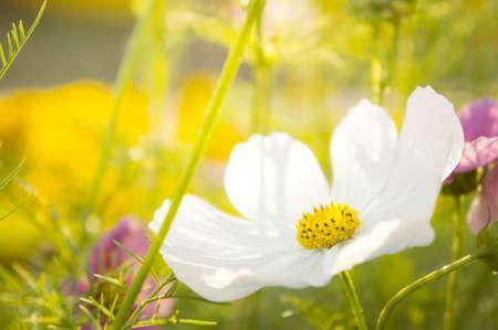 white flower on summer season