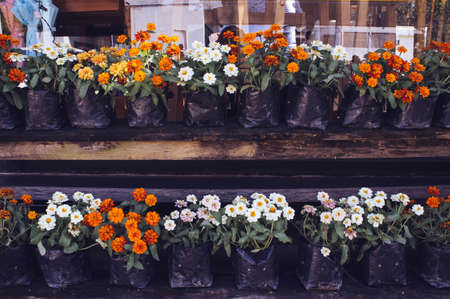 Flower pot in front of coffee shop Stock Photo