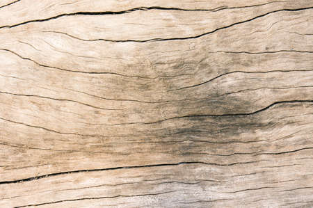 Texture old wood , dirty surface wood background, hardwood