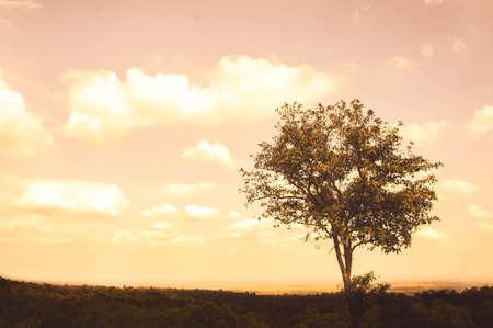 A big tree sadness alone on summer Stock Photo