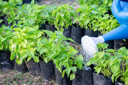 Watering plants  watering vegetables in the nature garden