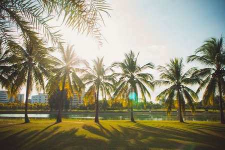 The coconut palm in the park on summer , lighting in the day park Stok Fotoğraf