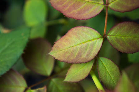 Leaves in the garden , leaf , foliage on season