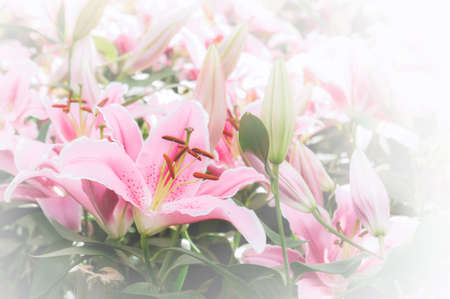 flowers lilly in the garden vintage style flowers background Stok Fotoğraf