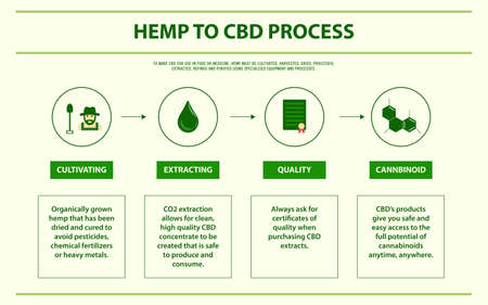 Hemp to CBD Process horizontal infographic illustration about cannabis as herbal alternative medicine and chemical therapy, healthcare and medical science vector.  イラスト・ベクター素材