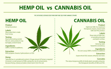 Hemp Oil vs Cannabis Oil horizontal infographic illustration about cannabis as herbal alternative medicine and chemical therapy, healthcare and medical science vector.  イラスト・ベクター素材