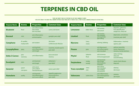 Terpenes in CBD Oil horizontal infographic illustration about cannabis as herbal alternative medicine and chemical therapy, healthcare and medical science vector.  イラスト・ベクター素材
