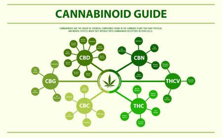 Ilustración de infografía horizontal de guía de cannabinoides sobre el cannabis como medicina alternativa a base de hierbas y terapia química, salud y vector de ciencia médica. Ilustración de vector