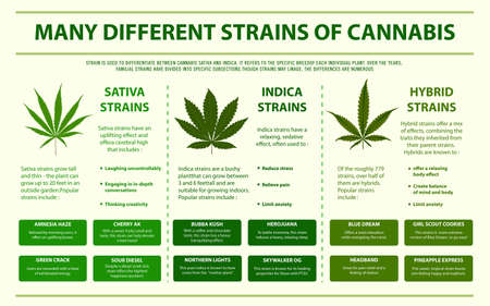 Many Different Strains of Cannabis horizontal infographic illustration about cannabis as herbal alternative medicine and chemical therapy, healthcare and medical science vector. 免版税图像 - 130837054