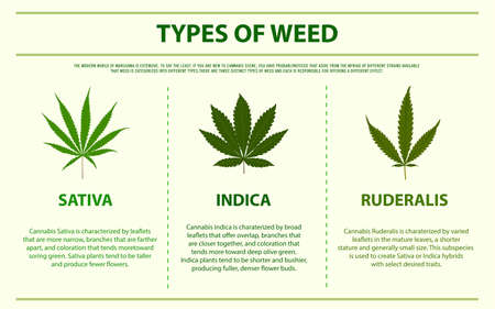 Types of Weed horizontal infographic illustration about cannabis as herbal alternative medicine and chemical therapy, healthcare and medical science vector.