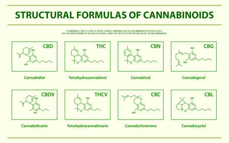 Structural Formulas of Main Natural Cannabinoids horizontal infographic illustration about cannabis as herbal alternative medicine and chemical therapy, healthcare and medical science vector.