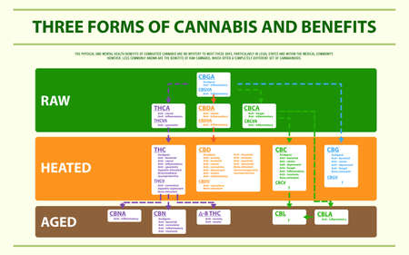Three Forms of Cannabis and Benefits horizontal infographic illustration about cannabis as herbal alternative medicine and chemical therapy, healthcare and medical science vector.  イラスト・ベクター素材
