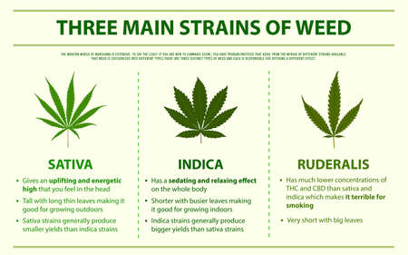 Three Main Strains of Weed horizontal infographic illustration about cannabis as herbal alternative medicine and chemical therapy, healthcare and medical science vector. Stock Illustratie