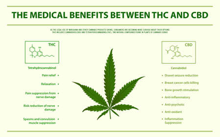 The Medical Benefits Between THC and CBD horizontal infographic illustration about cannabis as herbal alternative medicine and chemical therapy, healthcare and medical science vector