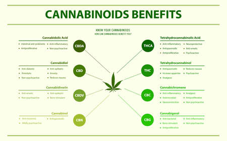 Cannabinoids Benefits horizontal infographic illustration about cannabis as herbal alternative medicine and chemical therapy, healthcare and medical science vector.