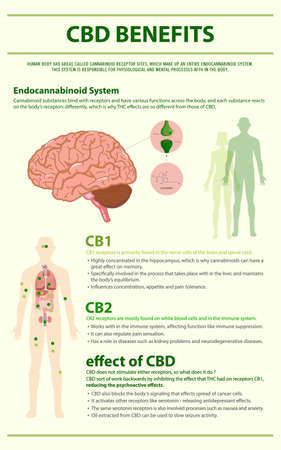 CBD Benefits Human vertical infographic illustration about cannabis as herbal alternative medicine and chemical therapy, healthcare and medical science vector.