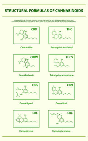 Structural Formulas of Main Natural Cannabinoids vertical infographic illustration about cannabis as herbal alternative medicine and chemical therapy, healthcare and medical science vector.