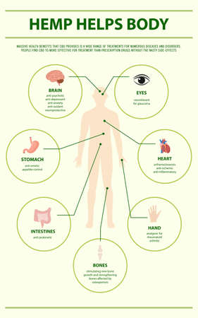 Hemp Helps Body vertical infographic illustration about cannabis as herbal alternative medicine and chemical therapy, healthcare and medical science vector.