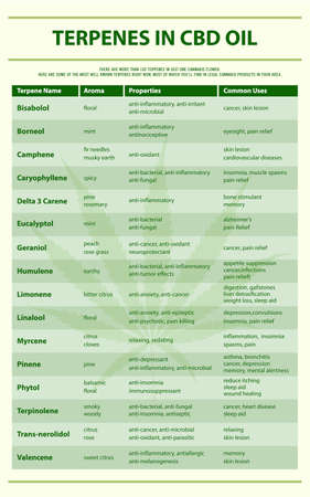 Terpenes in CBD Oil vertical infographic illustration about cannabis as herbal alternative medicine and chemical therapy, healthcare and medical science vector.  イラスト・ベクター素材