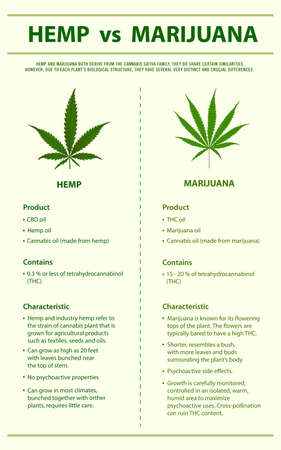 Hemp vs Marijuana vertical infographic illustration about cannabis as herbal alternative medicine and chemical therapy, healthcare and medical science vector. 向量圖像