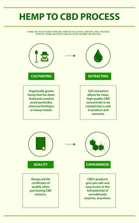 Hemp to CBD Process vertical infographic illustration about cannabis as herbal alternative medicine and chemical therapy, healthcare and medical science vector.