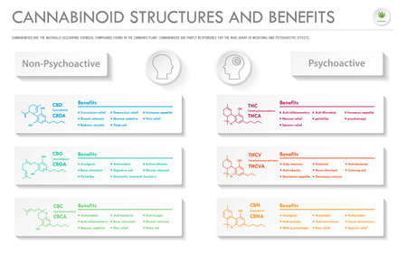 Cannabinoid Stuctures and Benefits horizontal business infographic illustration about cannabis as herbal alternative medicine and chemical therapy, healthcare and medical science vector.