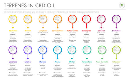 Terpenes in CBD Oil with Structural Formulas horizontal business infographic illustration about cannabis as herbal alternative medicine and chemical therapy, healthcare and medical science vector.  イラスト・ベクター素材