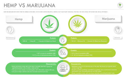 Hemp vs Marijuana horizontal business infographic illustration about cannabis as herbal alternative medicine and chemical therapy, healthcare and medical science vector.