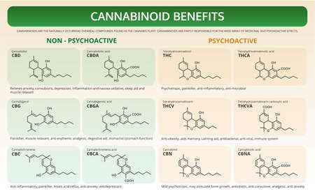 Cannabinoid Benefits horizontal textbook infographic illustration about cannabis as herbal alternative medicine and chemical therapy, healthcare and medical science vector.