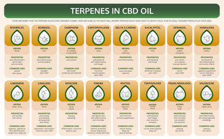 Terpenes in CBD Oil horizontal textbook infographic illustration about cannabis as herbal alternative medicine and chemical therapy, healthcare and medical science vector.