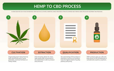 Hemp to CBD Process horizontal textbook infographic illustration about cannabis as herbal alternative medicine and chemical therapy, healthcare and medical science vector.  イラスト・ベクター素材