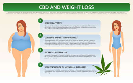 CBD and Weight Loss horizontal textbook infographic illustration about cannabis as herbal alternative medicine and chemical therapy, healthcare and medical science vector. Stock Illustratie