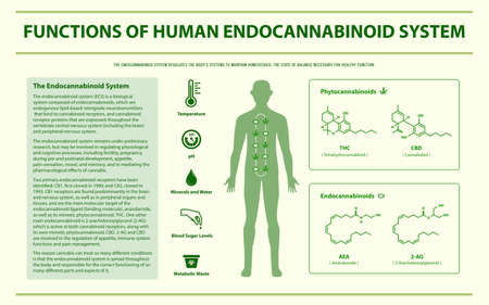 Functions of Human Endocananbinoid System horizontal infographic illustration about cannabis as herbal alternative medicine and chemical therapy, healthcare and medical science vector.
