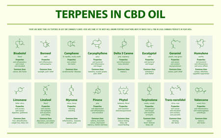 Terpenes in CBD Oil with Structural Formulas horizontal infographic illustration about cannabis as herbal alternative medicine and chemical therapy, healthcare and medical science vector. 写真素材 - 129818689