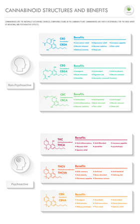 Cannabinoid Stuctures and Benefits vertical business infographic illustration about cannabis as herbal alternative medicine and chemical therapy, healthcare and medical science vector.