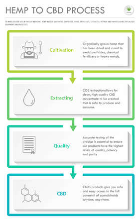 Hemp to CBD Process vertical business infographic illustration about cannabis as herbal alternative medicine and chemical therapy, healthcare and medical science vector.