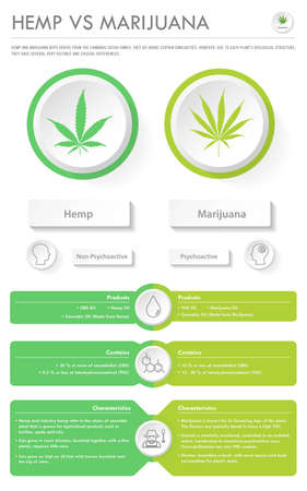 Hemp vs Marijuana vertical business infographic illustration about cannabis as herbal alternative medicine and chemical therapy, healthcare and medical science vector. Ilustração