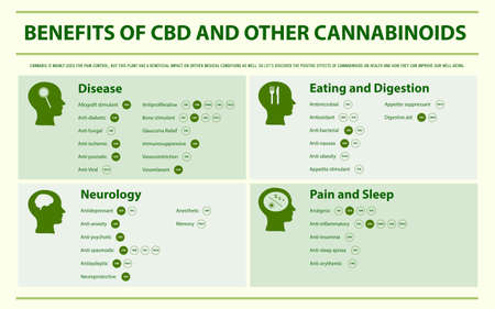 Benefits of CBD and Other Cannabinoids horizontal infographic illustration about cannabis as herbal alternative medicine and chemical therapy, healthcare and medical science vector.