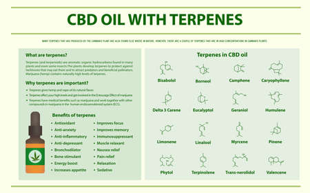 CBD Oil with Terpenes horizontal infographic illustration about cannabis as herbal alternative medicine and chemical therapy, healthcare and medical science vector. Banque d'images - 130160881