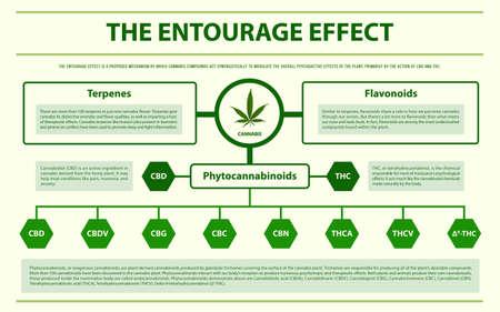 La ilustración de infografía horizontal de Entourage Effect sobre el cannabis como medicina alternativa a base de hierbas y terapia química, salud y vector de ciencia médica.
