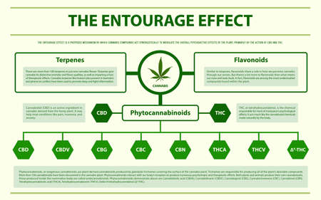 The Entourage Effect horizontal infographic illustration about cannabis as herbal alternative medicine and chemical therapy, healthcare and medical science vector. Иллюстрация