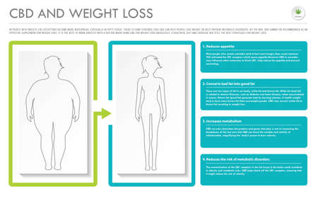 CBD and Weight Loss horizontal business infographic illustration about cannabis as herbal alternative medicine and chemical therapy, healthcare and medical science vector.