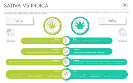 Sativa vs Indica horizontal business infographic illustration about cannabis as herbal alternative medicine and chemical therapy, healthcare and medical science vector.  イラスト・ベクター素材