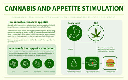 Cannabis and Appetite Stimulation horizontal infographic illustration about cannabis as herbal alternative medicine and chemical therapy, healthcare and medical science vector.  イラスト・ベクター素材