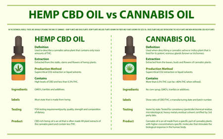 Hemp CBD Oil vs Cannabis Oil horizontal infographic illustration about cannabis as herbal alternative medicine and chemical therapy, healthcare and medical science vector.