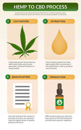 Hemp to CBD Process vertical textbook infographic illustration about cannabis as herbal alternative medicine and chemical therapy, healthcare and medical science vector.